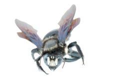 Humble bee Stock Photo
