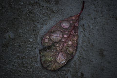 The humble leaf Royalty Free Stock Image