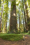 Humboldt Redwoods State Park Stock Photos