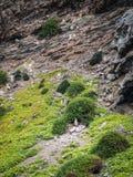 Humboldtpinguïn in Punta DE Choros, Chili Het Nationale park van de Humboldtpinguïn in Chili stock foto's