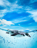 Humboldtpinguïn (Spheniscus-humboldti) royalty-vrije stock afbeeldingen