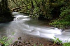 Humbug creek Royalty Free Stock Photo