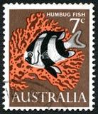 Humbug Fish Australian Postage Stamp Stock Image
