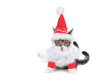 Humbug Santa Kitten Glaring at the Viewer Royalty Free Stock Photography
