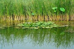 Humedal Imagenes de archivo