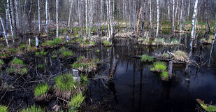 Humedal Imagen de archivo libre de regalías