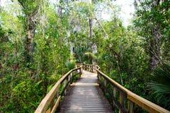 Humedal de la Florida, rastro de madera de la trayectoria en el parque nacional de los marismas en los E.E.U.U. Foto de archivo