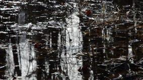 Humedal de la reserva de naturaleza en el lago Traunsee en Gmunden Austria septentrional metrajes