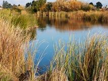 Humedal en el área de la bahía Fotos de archivo