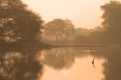 Humedal en el amanecer fotografía de archivo