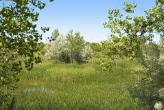 Humedal en la pradera de Colorado Fotos de archivo libres de regalías