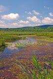 Humedales Berkshires mA Imagen de archivo libre de regalías
