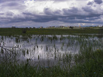 Humedales de la pradera Fotos de archivo