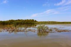 Humedales del delta de Danubio Fotos de archivo