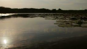 Humedales del delta de Danubio en el movimiento metrajes
