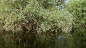 Humedales del delta de Danubio en el movimiento almacen de metraje de vídeo