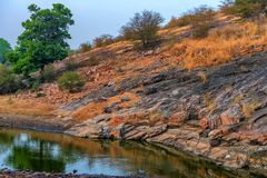 Humedales del parque nacional de Ranthambore, la India Imágenes de archivo libres de regalías