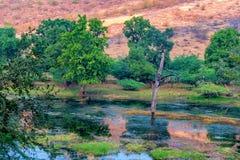 Humedales del parque nacional de Ranthambore, la India Imagen de archivo libre de regalías