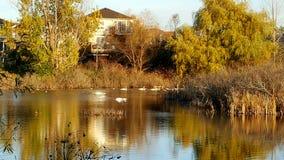 Humedales durante otoño Foto de archivo
