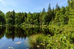 humedales escénicos con el lago o el río del país en verano Imagen de archivo
