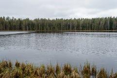 humedales escénicos con el lago o el río del país en verano Imágenes de archivo libres de regalías