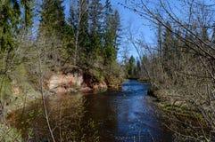 humedales escénicos con el lago o el río del país en verano Imagenes de archivo
