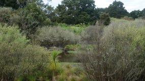 Humedales naturales de Nueva Zelanda imágenes de archivo libres de regalías