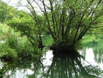 Humedales o pantano Fotografía de archivo