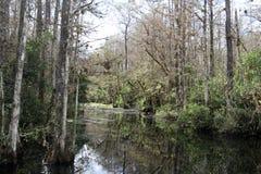 Humedales subtropicales Fotografía de archivo libre de regalías