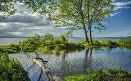 Humedales y océano herbosos verdes Foto de archivo libre de regalías