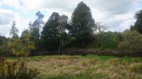 Humedales y swampland de Nueva Zelanda imagenes de archivo