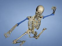 Humerus M-SKEL-HUMERUS Sk-1, 3D Model. Humerus, Human Skeleton, Blue Background, 3D Model - The humerus is a long bone in the arm or forelimb that runs from the royalty free stock images