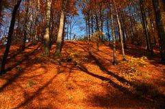 Humeur colorée d'automne images libres de droits