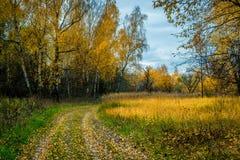 Humeur d'automne Photographie stock libre de droits