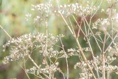 Humeur d'automne, saisons Le fond de l'usine sèche naturelle s'embranche o image libre de droits