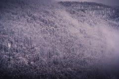 Humeur d'hiver Photo libre de droits