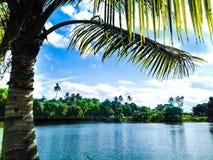 Humeur fraîche de grand de jour ensoleillé de palmier nuage blanc de ciel bleu Photos stock