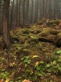 Humeurig Autumn Forest Located in de Heuvels Groene grasbladeren Mistige ochtend royalty-vrije stock foto's