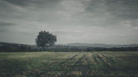Humeurig landschap een boom en gebieden stock afbeelding