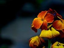 Humeurige bloem Stock Foto's