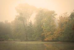 Humeurige de herfstochtend in een bospark Stock Afbeelding