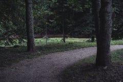 Humeurige Foto van de Weg in een Park, tussen Desaturated Hout -, royalty-vrije stock fotografie
