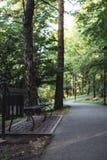 Humeurige Foto van de Weg in een Park, tussen Desaturated Hout -, stock afbeelding