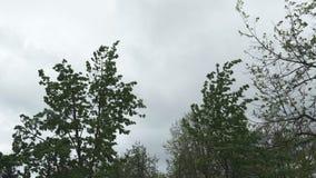 Humeurige hemel tijdens het winderige en regenachtige weer met lage wolken - de orkaan en de hagel komen spoedig stock video