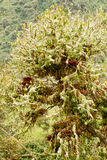 Humid andean moor landscape in Oyacachi, Ecuador Stock Images
