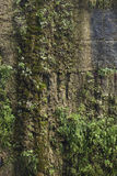 Humid cliff. The close-up of humid cliff with many grass Royalty Free Stock Image