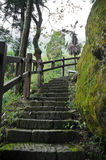 Humid and damp old stair climbing steps in deep forest. In TAiwan Stock Images