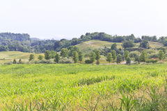 Humid Farm Landscape Stock Photography