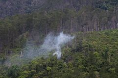 Humid forest with smoke. Apparently from someone burning something with its interior Royalty Free Stock Images