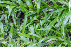 Humid green grass Stock Photography